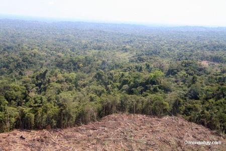 Deforestation_3